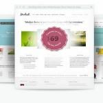 Full-Themes-Plugins-