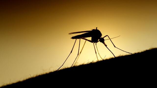 ww1 谷歌子公司欲用人工智能技术消灭蚊子