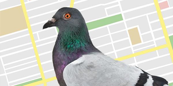 Blog 16pigeon GOOGLE鸽子更新:影响主要本地搜索的全新算法更新